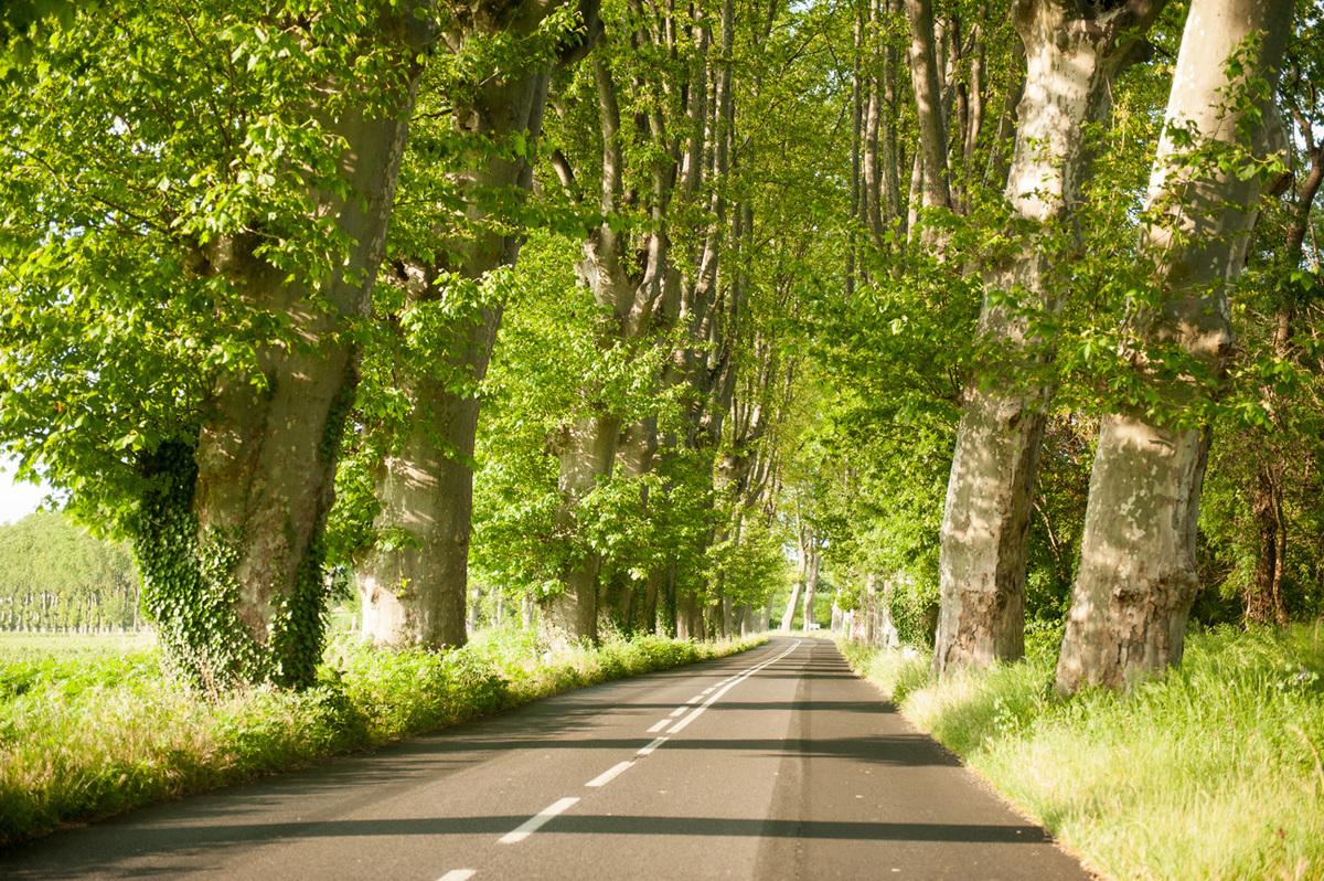 languedoc roadtrip