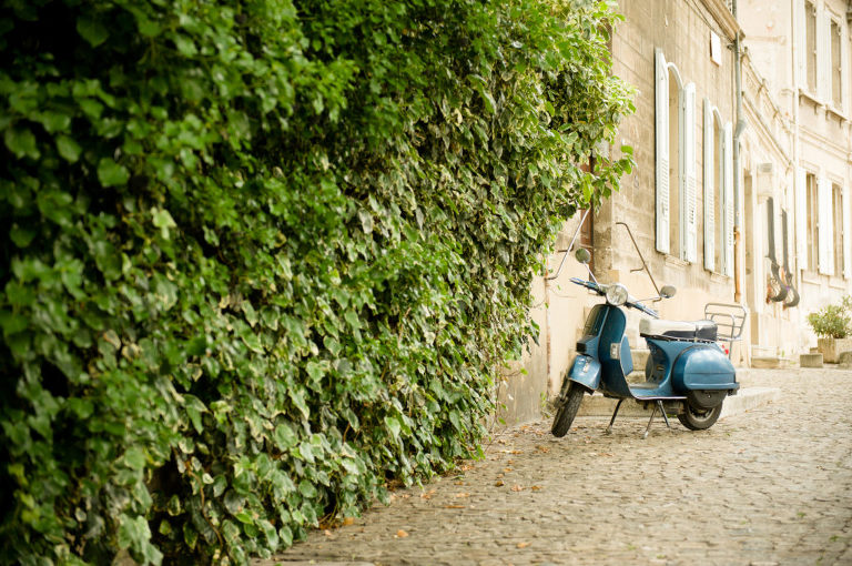 How to move to France Vine and the Olive