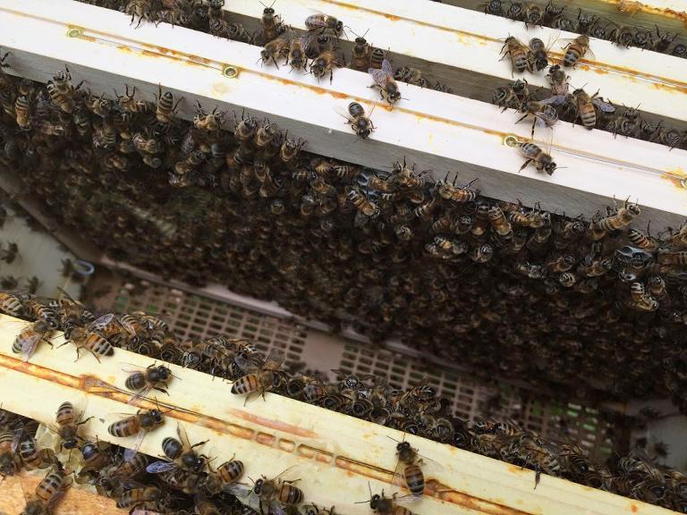 french honey harvest